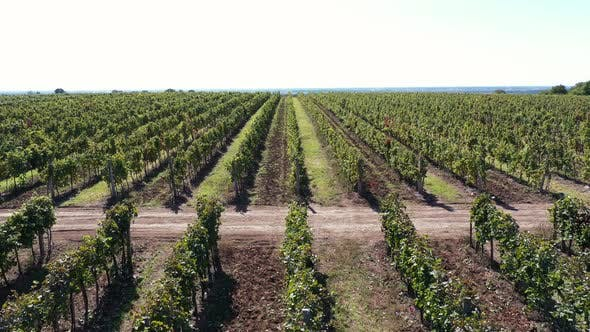 Thumbnail for Vines
