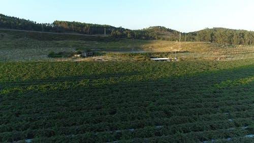 Farming Fields of Vegetables