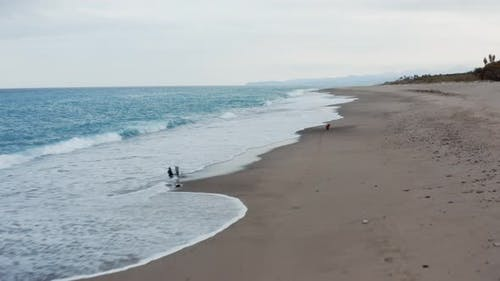 Little dog runs on the beach