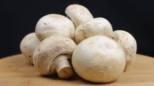 Agaricus Mushrooms Rotating
