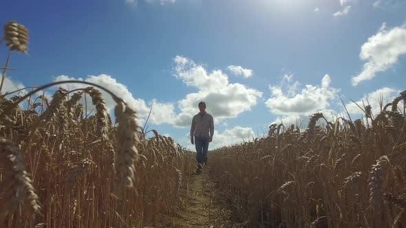 Thumbnail for Farmer in wheat field