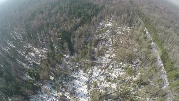 Aerial scene of mixed forest with birches and spruce trees in winter
