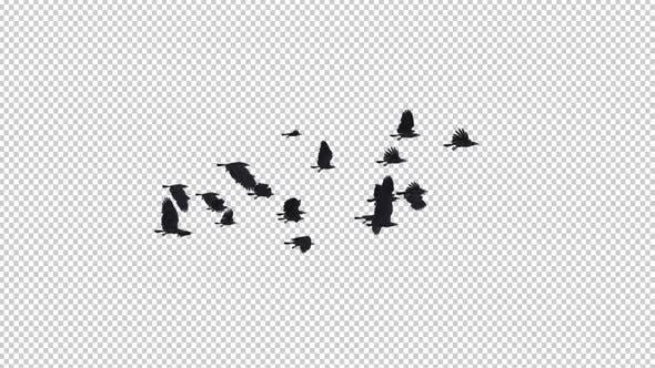 22 schwarze Vögel - Fliegende Transition II