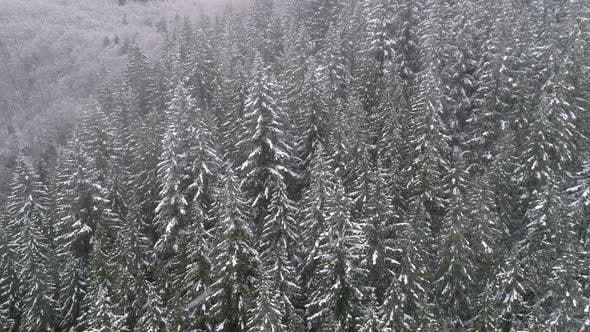 Thumbnail for Aerial Nature Background Floating Over Snowy Forest Trees With Cold Winter Storm Weather