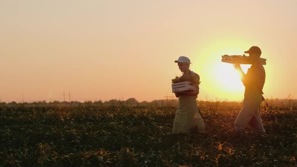 Thumbnail for Two Farmers Carry Boxes with Vegetables on the Field