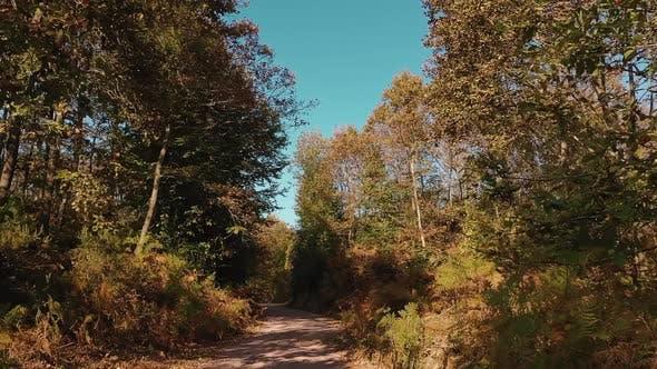 Autumn Jungle
