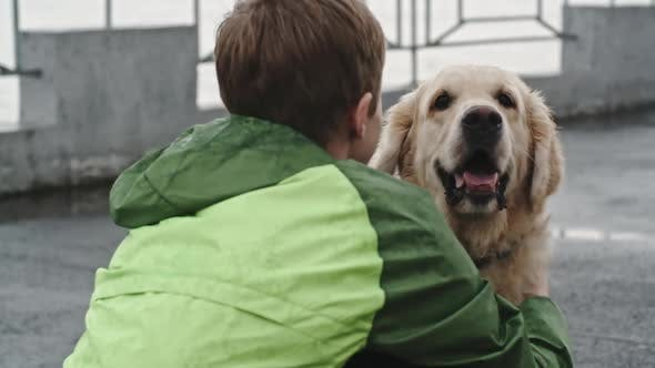 Thumbnail for Child Petting and Stroking Cute Labrador Dog