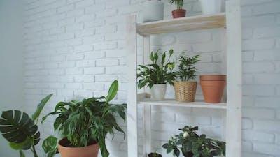 Botany Composition of Home Interior Garden