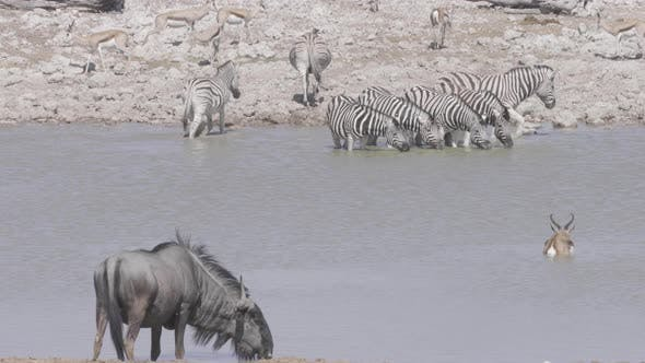 Thumbnail for African Waterhole