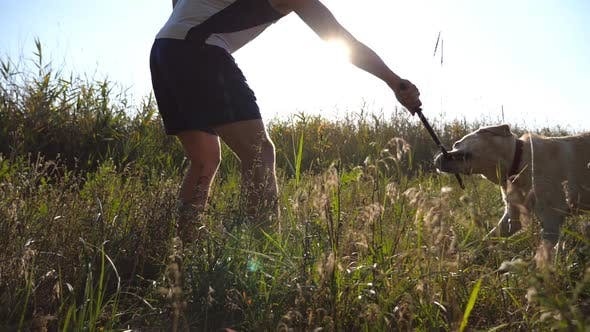 Thumbnail for Male Owner Playing with His Labrador or Golden Retriever Trying Take His Stick From Him. Young Man