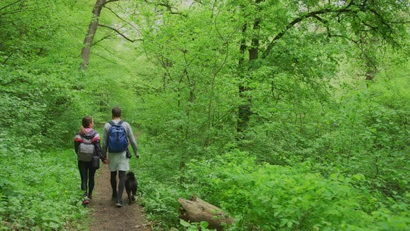 Thumbnail for Couple walking in a green forest