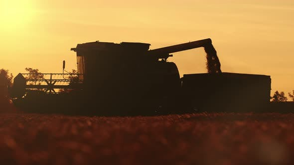 Thumbnail for Combine Silhouette and Wheat Grain Pouring Into Truck Box at Sunset in Slo-mo