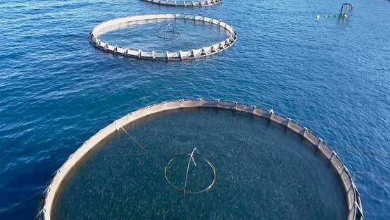 Thumbnail for Aquaculture Aerial View