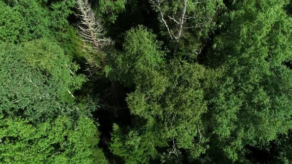 Thumbnail for A View From Above of Wildlife. Green Vegetation in the Siberian Forest