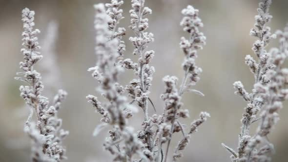 Thumbnail for Grass Is Frozen in Ice Crystals on the Backdrop