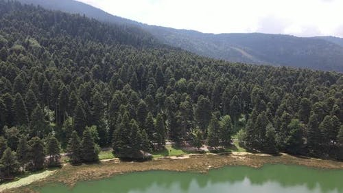Naturel Forest Lake