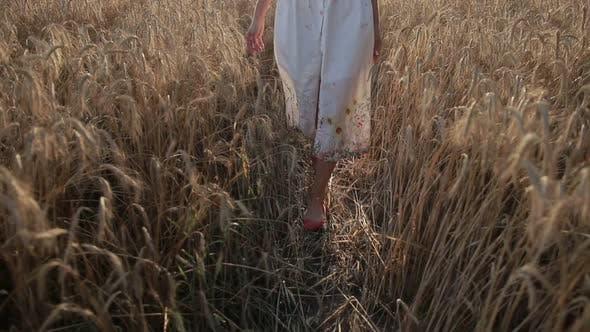 Thumbnail for Slim Female Legs Walking in Ripe Wheat Field