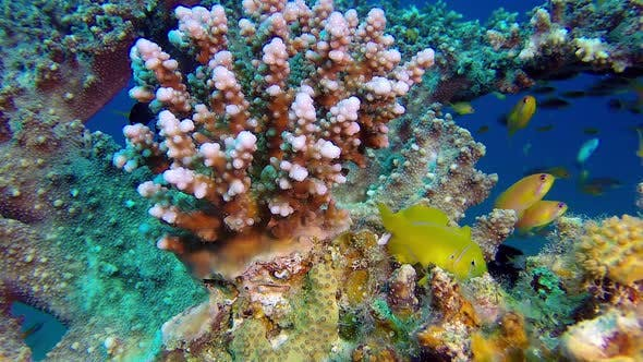 Thumbnail for Colorful Tropical Coral Reef