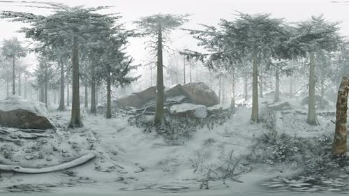 VR360 Conifer Forest on Snowy Winter Day