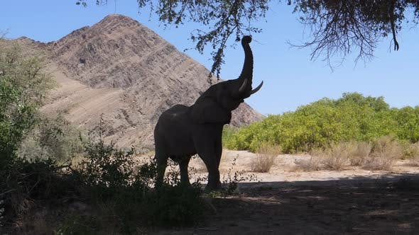 Thumbnail for Elephant reaching out to grab a tree branch