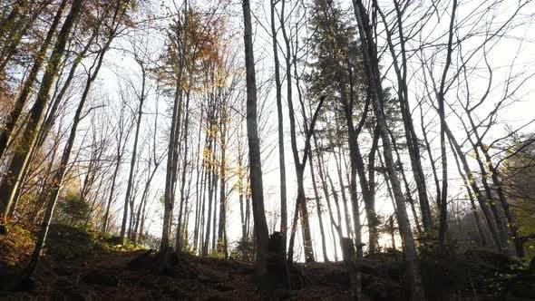 Thumbnail for Sun lighting through the trees