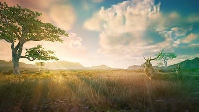 Savanna Grassland HD
