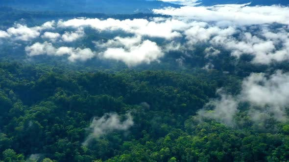 Thumbnail for Hyperlapse of a tropical forest with a layer of fog covering the canopy