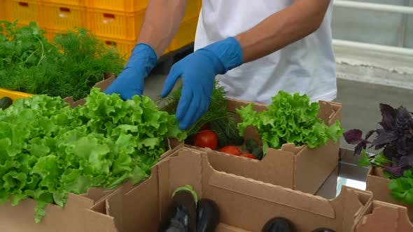 Volunteer in Gloves Packing Food Vegetables Donation Box to Help
