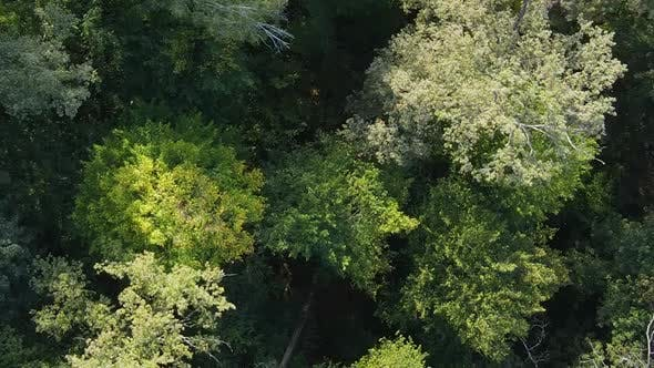 Thumbnail for Vertical Video Aerial View of Trees in the Forest