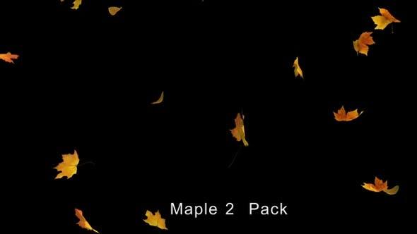 Thumbnail for Falling Maple