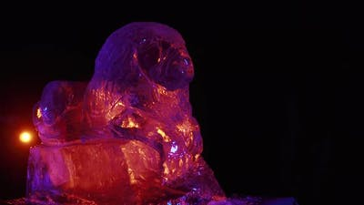 Colorful Lighting Around an Ice Sculpture of a Lion Studio