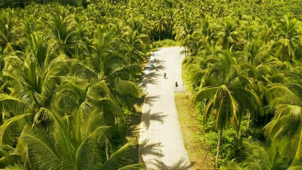 Cover Image for Aerial View of Young Couple of Tourists on the Road Among Coconut Palms in Siargao, Philippines.