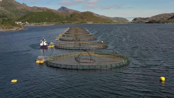 Thumbnail for Farm Salmon Fishing in Norway
