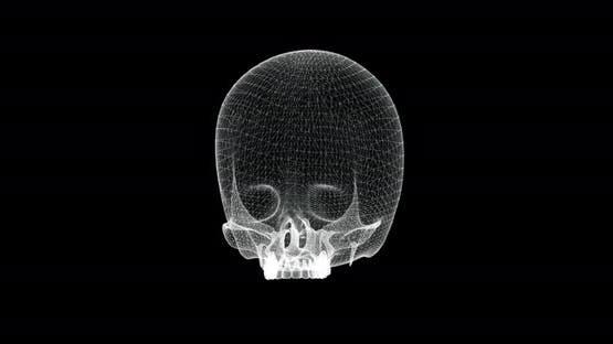 Hologram Screen of Cranium