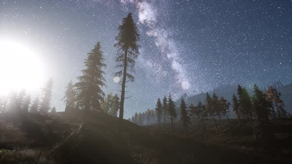 Thumbnail for Milky Way Stars Above Pine Trees Forest