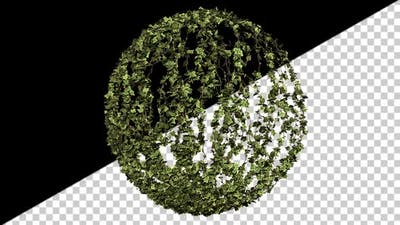 Ivy Growth
