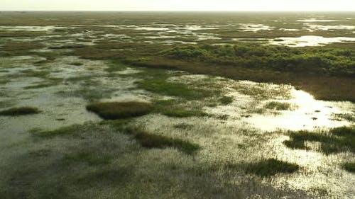 Aerial Video Sun Glimmering In Swamp Water