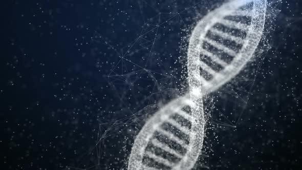 Thumbnail for Plexus DNA