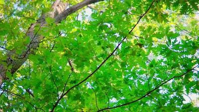 Trees (4K)