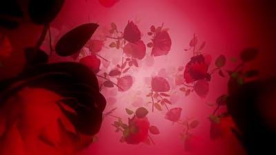 Rose 02 Hd