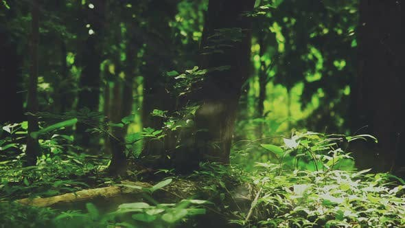 Thumbnail for Mystique Forest