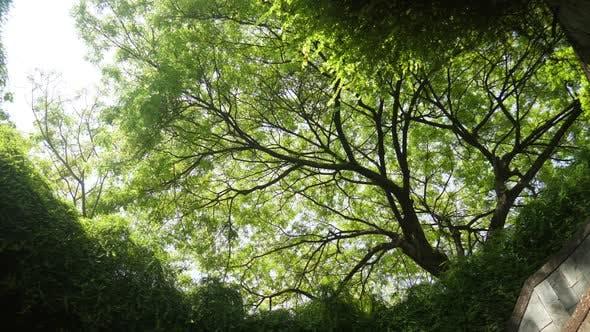 Thumbnail for Tree