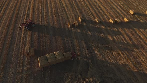 Forklift Tractor Maneuvering an Open Field Collecting Boxes of Hay Stacks