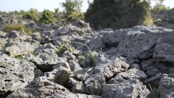 Cover Image for Broken Basalt Stones