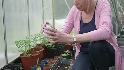 MS TU TD Woman gardening in greenhouse / Breda, NoordBrabant, Netherlands