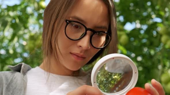Thumbnail for Landwirtschaft und Anbau. Porträt von jungen frau bauern in tomaten-feld, zeigen gemüse an die