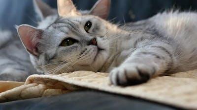 Close Up Fat Cat Sleeping On Sofa