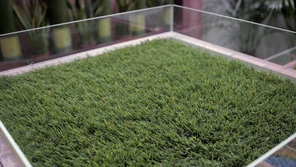 Thumbnail for Selection of Artificial Grass Carpet Close Up Shop Supermarket