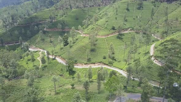 Tea Plantations and Rural Roads on Picturesque Green Slope