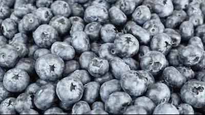 Freshly Harvested Blueberries Fruit Background.
